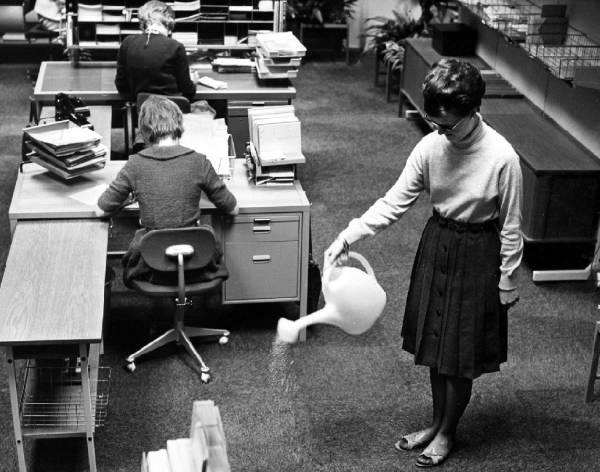 Kontorspersonalen vattnar heltäckningsmattan